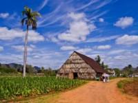 Plantacion de Tabaco, Viñales Cuba